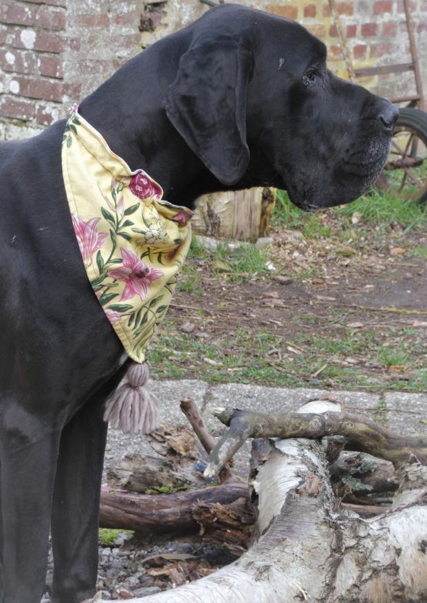 Bandana reversible grand hortensias et bleus corail avec son ponpon fifi au jardin daily les compagnons de fifi au jardin mannequin chien marius d13 1