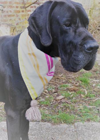 Bandana reversible grand hortensias et rayures colorees fond blanc avec son ponpon fifi au jardin daily les compagnons de fifi au jardin mannequin chien marius i7 1