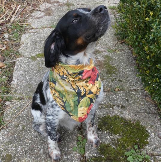 Bandana reversible petit hortensias et bleus corail avec son ponpon fifi au jardin daily les compagnons de fifi au jardin mannequin chien orloff d21
